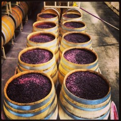 wine-barrel-fermenting